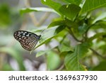 the name of the butterfly is... | Shutterstock . vector #1369637930