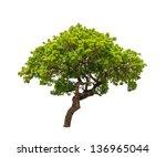 banyan tree  ficus annulata  ... | Shutterstock . vector #136965044