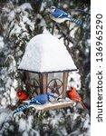 Bird Feeder In Winter With Blu...