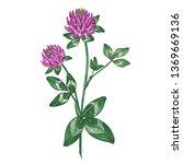 red clover flower. color... | Shutterstock .eps vector #1369669136