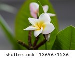 the scientific name of this... | Shutterstock . vector #1369671536