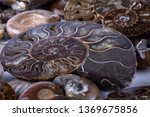 ammonite background. different... | Shutterstock . vector #1369675856