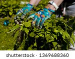 female hands wearing colorful... | Shutterstock . vector #1369688360