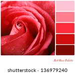 Red Rose Colour Palette With...