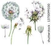 dandelion blowball with seeds....   Shutterstock . vector #1370099330