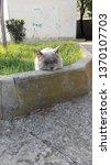 cat taking a nap. | Shutterstock . vector #1370107703