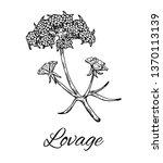 Ink Lovage Flower. Hand Drawn...