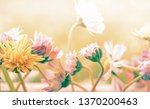 beautiful pastel flowers... | Shutterstock . vector #1370200463
