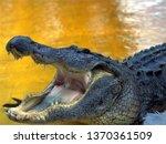 Crocodile's Mouth Closeup