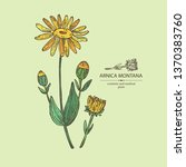 background with arnica montana  ... | Shutterstock .eps vector #1370383760