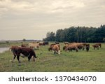 cattle in a pasture on the...   Shutterstock . vector #1370434070