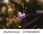 close up picture of morning... | Shutterstock . vector #1370646833