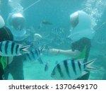 walking underwater on seabed... | Shutterstock . vector #1370649170