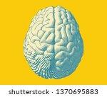light green hemispheres human... | Shutterstock .eps vector #1370695883