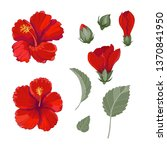 red hibiscus with leaves and... | Shutterstock .eps vector #1370841950