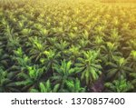 aerial view of palm oil... | Shutterstock . vector #1370857400