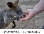 Small photo of The beautiful Australian animals that are being taken care of by the volunteers of Humbug Scrub Wildlife Sanctuary