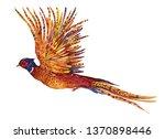Bird Golden Pheasant ...