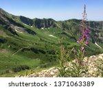 green  grass covered mountains... | Shutterstock . vector #1371063389