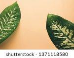 green leaves of dieffenbachia... | Shutterstock . vector #1371118580
