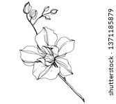 vector orchid floral botanical... | Shutterstock .eps vector #1371185879