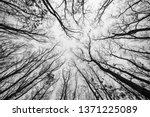 acorn  oak tree forest in... | Shutterstock . vector #1371225089