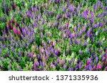 a plenty of flowers make a... | Shutterstock . vector #1371335936