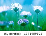 beautiful flowers background ... | Shutterstock . vector #1371459926