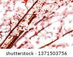 botanical beauty  dream garden... | Shutterstock . vector #1371503756