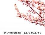 botanical beauty  dream garden... | Shutterstock . vector #1371503759