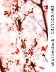 botanical beauty  dream garden... | Shutterstock . vector #1371503780