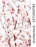 botanical beauty  dream garden... | Shutterstock . vector #1371503783