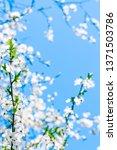 floral beauty  dream garden and ... | Shutterstock . vector #1371503786