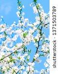 floral beauty  dream garden and ... | Shutterstock . vector #1371503789