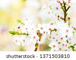 floral beauty  dream garden and ... | Shutterstock . vector #1371503810