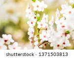 floral beauty  dream garden and ... | Shutterstock . vector #1371503813