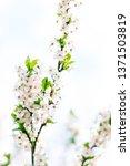 floral beauty  dream garden and ... | Shutterstock . vector #1371503819