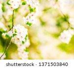 floral beauty  dream garden and ... | Shutterstock . vector #1371503840