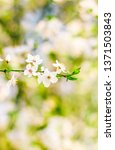 floral beauty  dream garden and ... | Shutterstock . vector #1371503843