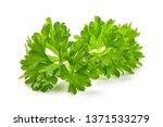 fresh organic parsley  close up ... | Shutterstock . vector #1371533279