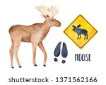 Moose Drawing Collection With...