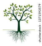 green tree with roots on white... | Shutterstock .eps vector #1371593579