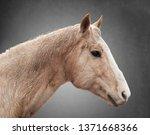 equine portrait 1 | Shutterstock . vector #1371668366