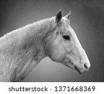 equine portrait 3 | Shutterstock . vector #1371668369
