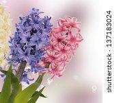 spring  beautiful flower.... | Shutterstock . vector #137183024