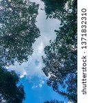 Small photo of Upraise angle of green leaves and tree branches in blue sky and clouds background.