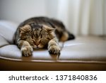 cat cute little red kitten... | Shutterstock . vector #1371840836