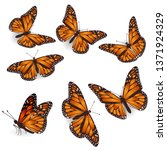 Stock vector vector orange butterflies illustration set 1371924329