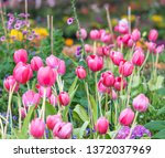 selective  focus  colorful ... | Shutterstock . vector #1372037969