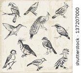 hand drawn birds   for design... | Shutterstock .eps vector #137207000